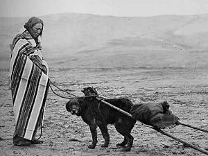 Brule Lakota man with a dog travois, from Paul Dyck's ethnography that includes late 19th century illustrating photos like this one, 'Brule: The Sioux People of the Rosebud.'